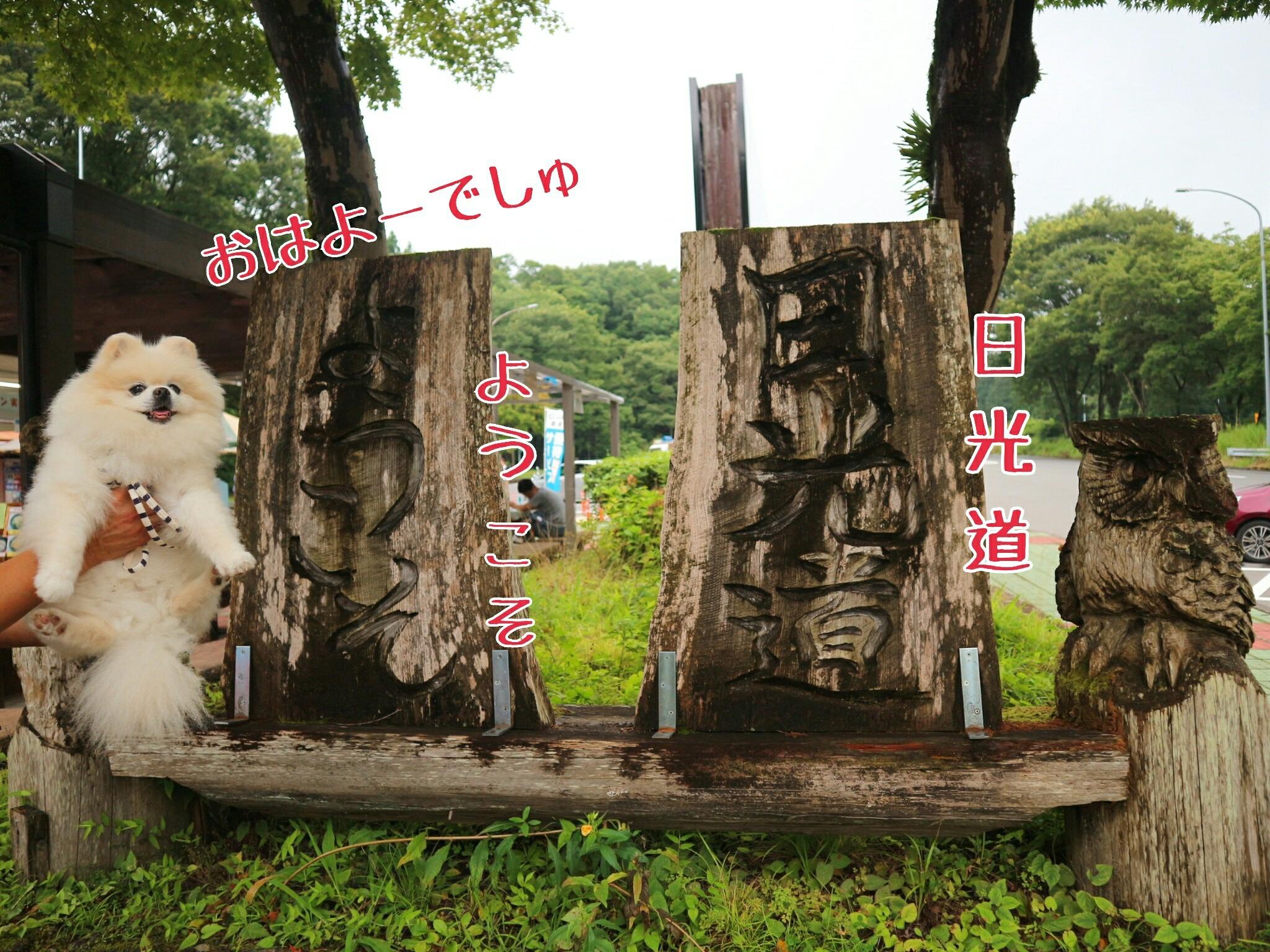 1 旅行 栃木 県 家族 1