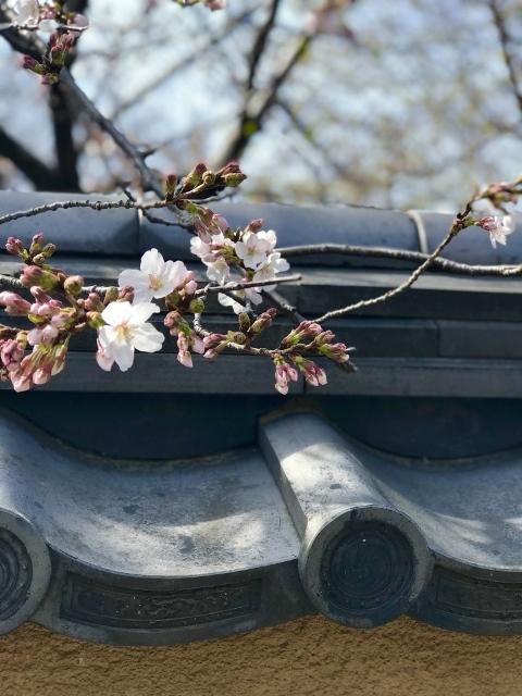 桜2021 ①