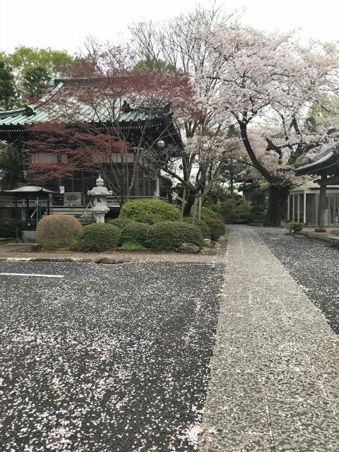 桜2021 ②