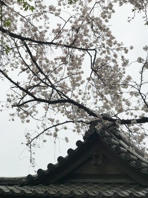 桜2021 ③