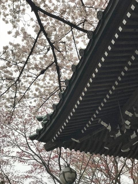 桜2021 ⑤