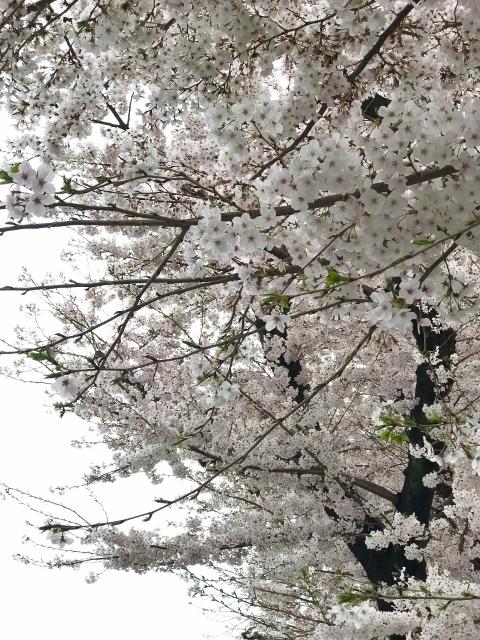 桜2021 ⑥