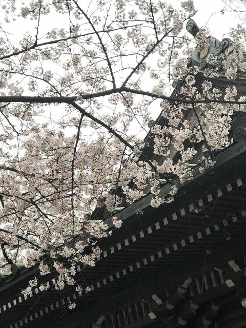 桜2021 ⑩