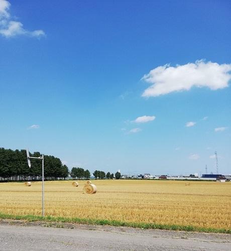 小麦畑2s[