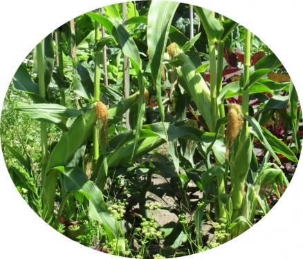 IMG_0891-crop.jpg