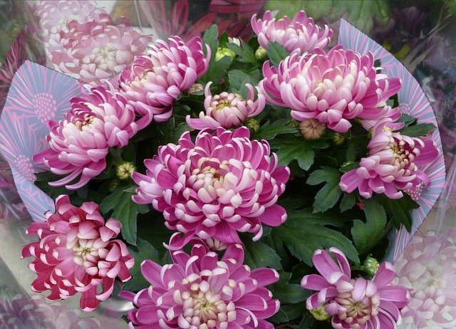 chrysanthemums-bouquet-74949_640.jpg