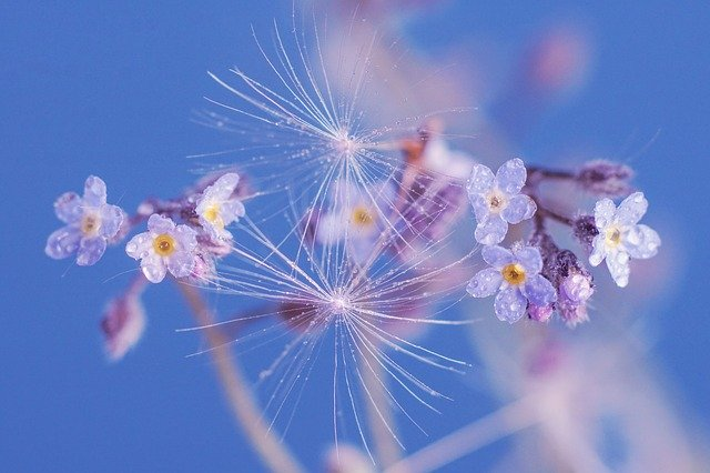 forget-me-not-4184594_640.jpg