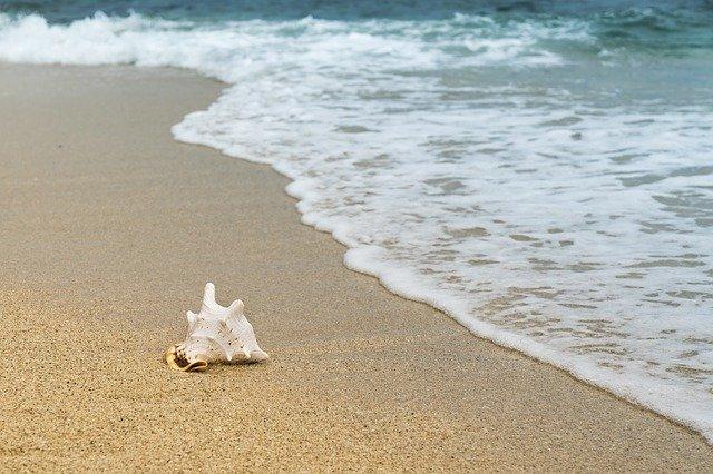 shellfish-3062011_640.jpg