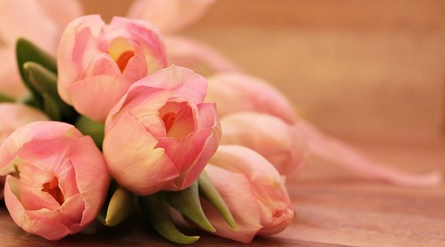 tulips-2068692_640.jpg