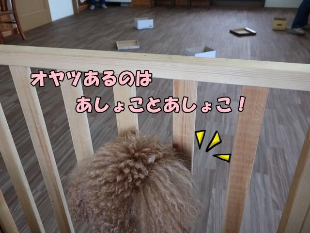 IMG_048920200802.jpg