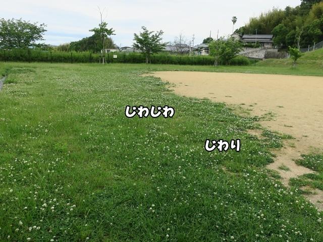 IMG_939120200601.jpg