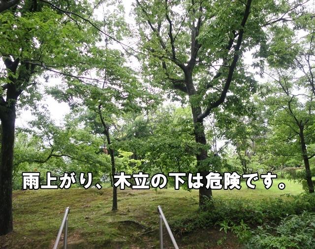 IMG_967820200619.jpg