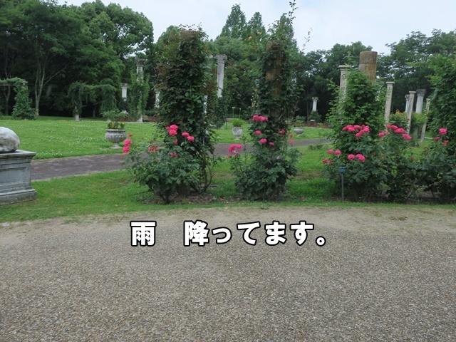 IMG_985320200625.jpg