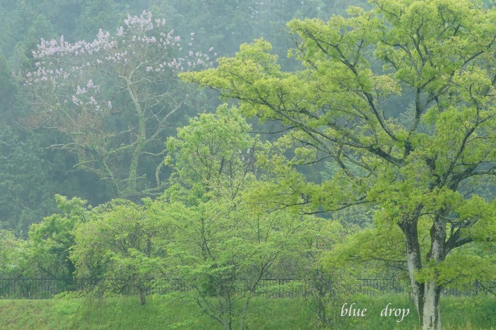新緑の里山*