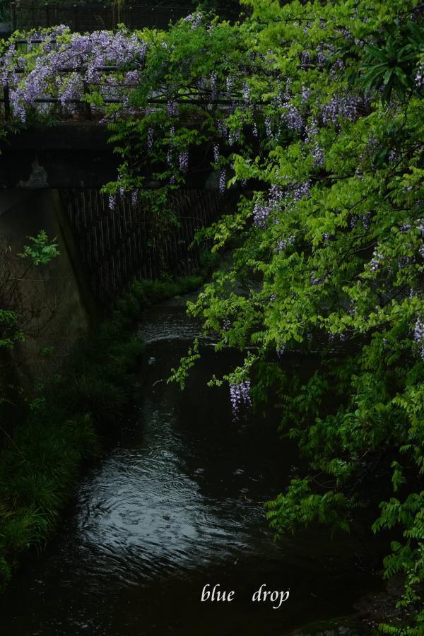 渓流に咲く*