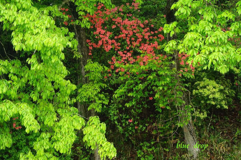 新緑の森*