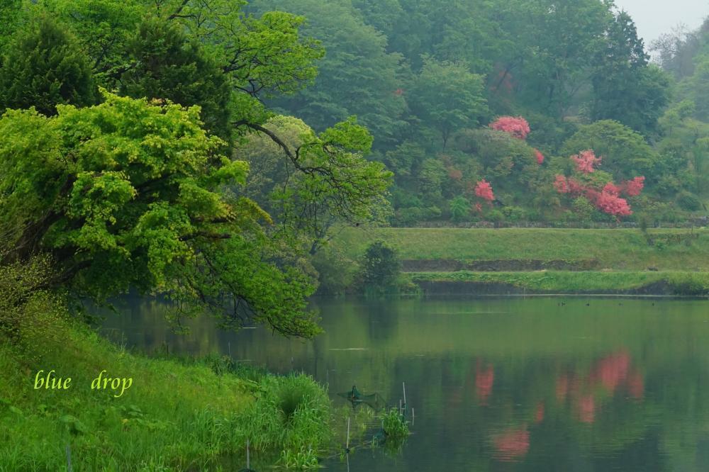 春の水辺*