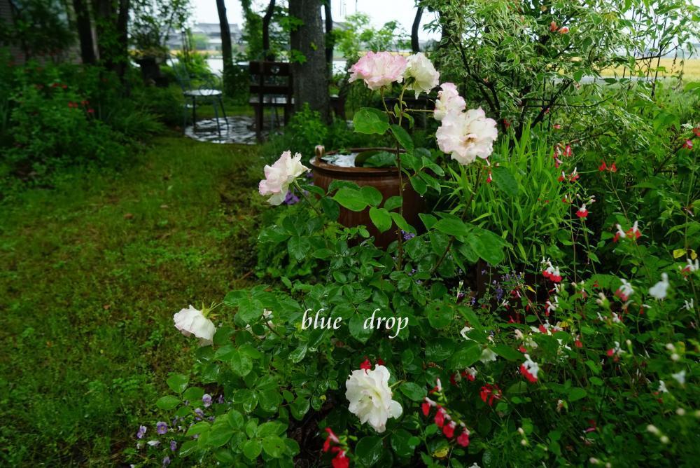 薔薇の咲く庭*