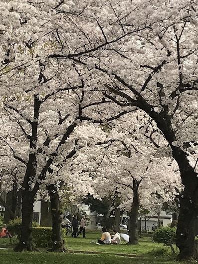 210401桜