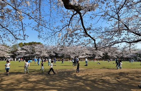 s-蕨公園桜DSC_1994_01
