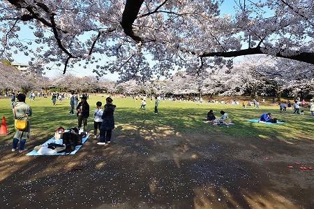 s-蕨公園桜DSC_2000_01