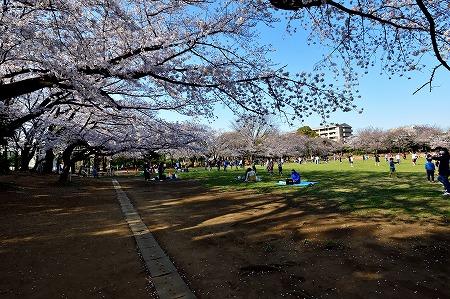 s-蕨公園桜DSC_2003_01