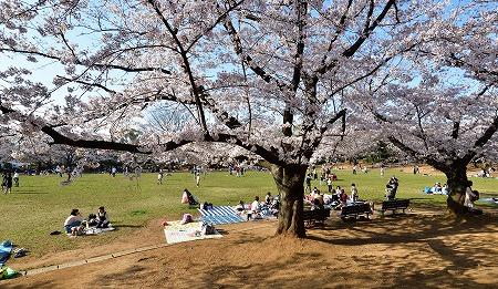 s-蕨公園桜DSC_2008_01