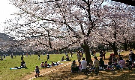 s-蕨公園桜DSC_2013_01