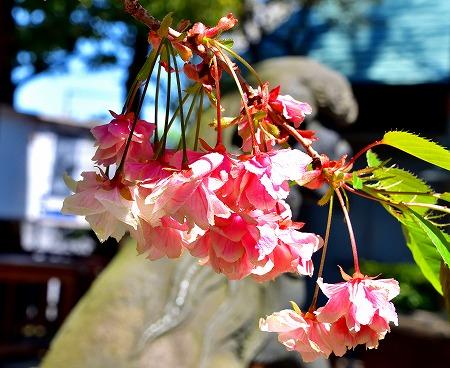 s-七社神社DSC_2088_01