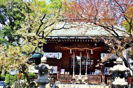 s-七社神社DSC_2113_01