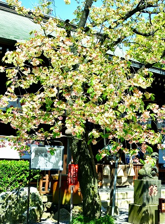s-七社神社DSC_2115_01