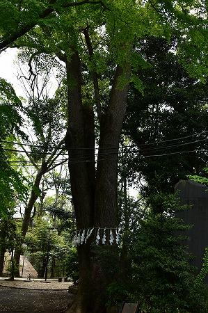 s-代々木八幡DSC_2135