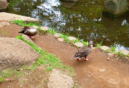 s-蕨中央公園DSC_2294_01