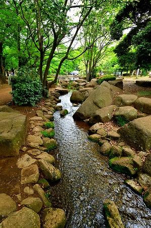 s-蕨中央公園DSC_2309_01