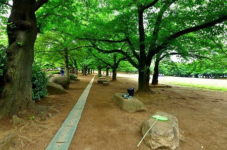 s-蕨中央公園DSC_2313_01