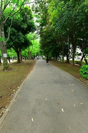 s-蕨中央公園DSC_2316