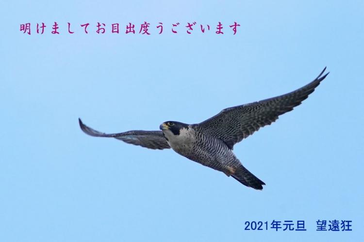 DSC04722s.jpg