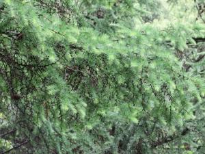 ラーチ🎄信州冬、東山春_200617_0002