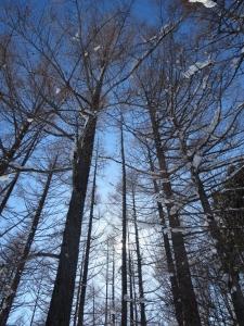 ラーチ🎄信州冬、東山春_200617_0016