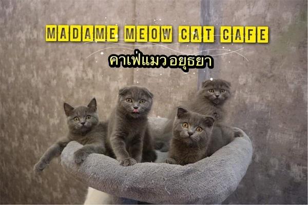 Cat cafe (11)