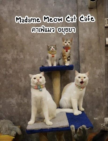 Cat cafe (13)