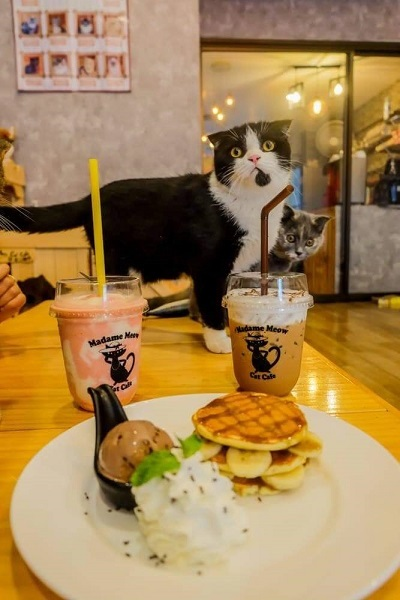 Cat cafe (7)