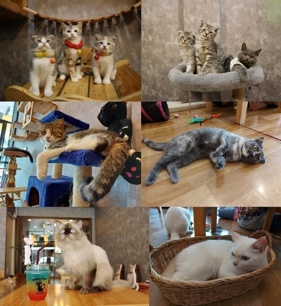 Cat cafe (8)