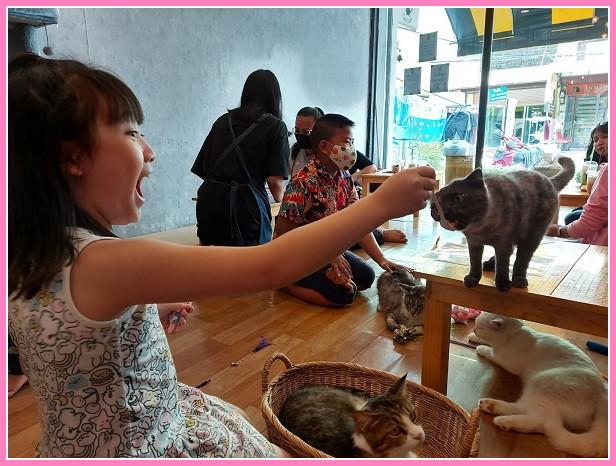 Cat cafe (6)