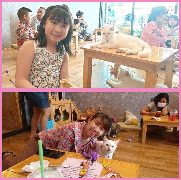 Cat cafe (14)
