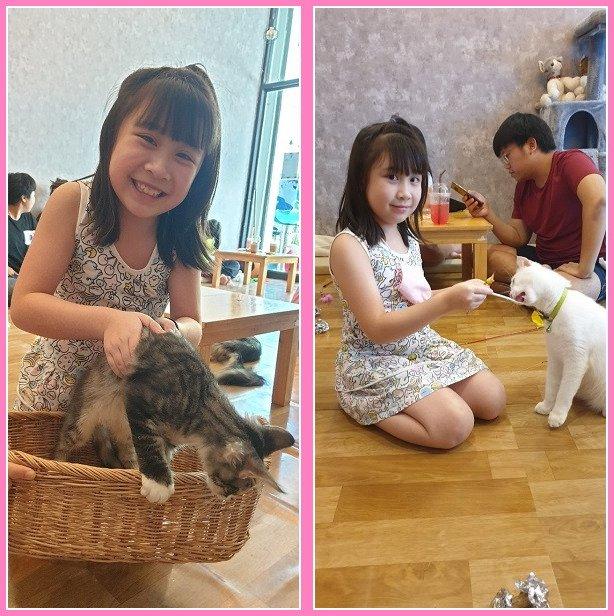 Cat cafe (15)