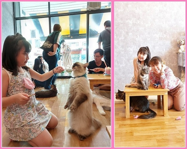 Cat cafe (2)