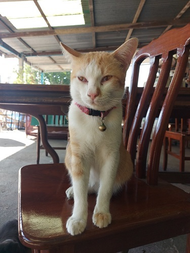 A cat in temple (1)