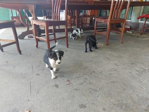 Puppies (3)