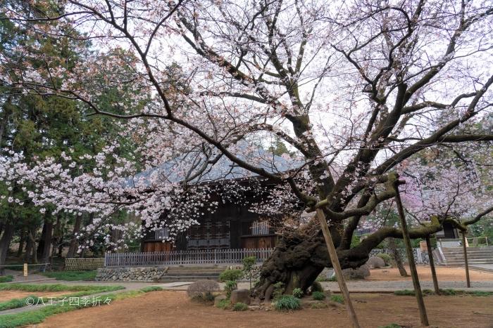 広園寺DSC02314